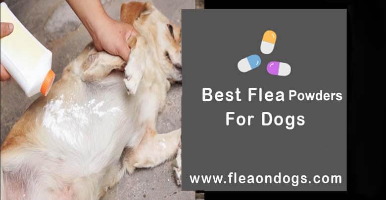 best flea powders for dogs