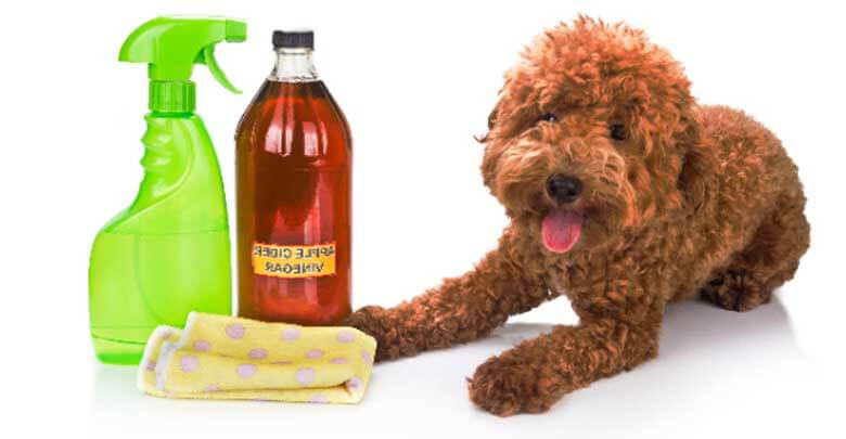 home remedies for fleas on dogs