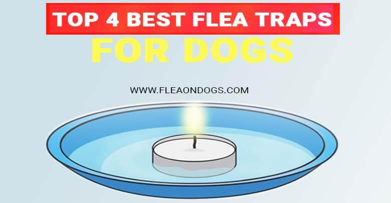 best flea traps