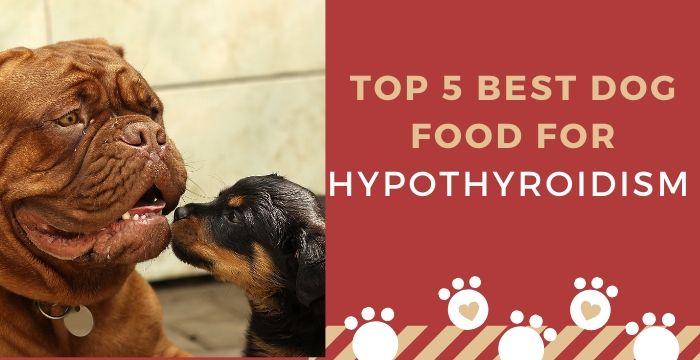 dog food for hypothyroidism