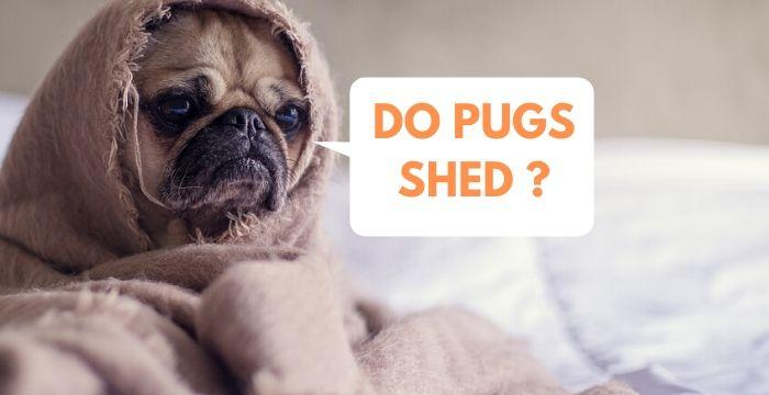 DO-PUGS-SHED-_