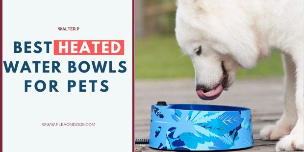 heated water bowls