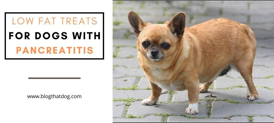 Low Fat Dog Treats For Pancreatitis