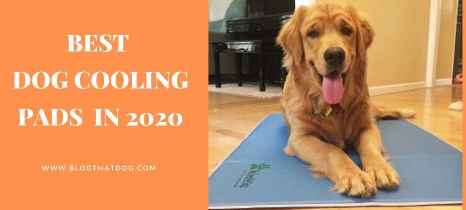 best dog cooling mat pad 2020