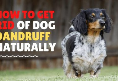 How to rid of dog dandruff naturally