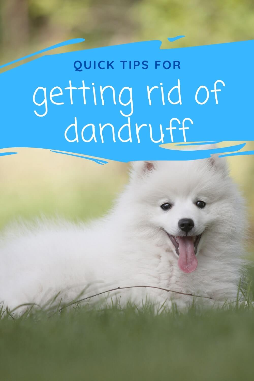 Quick tips for getting rid of dandruff on dogs.