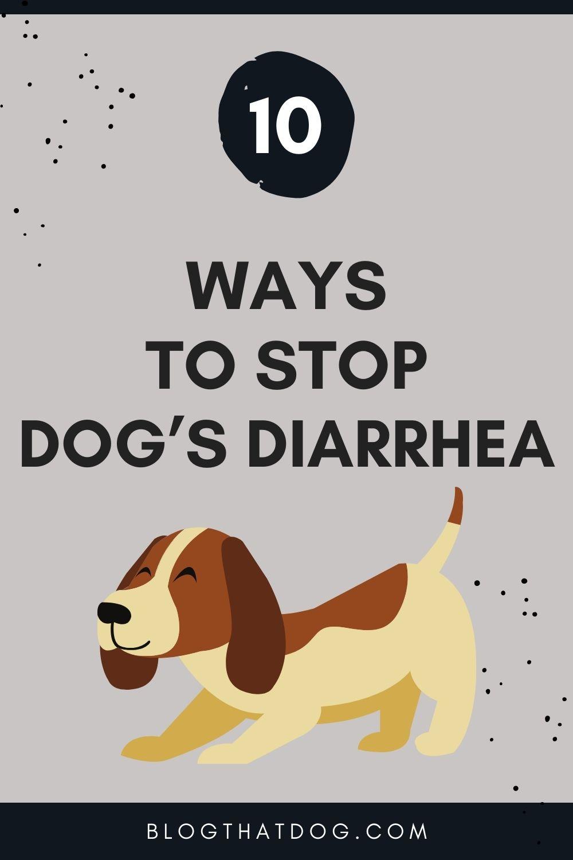 10 natural ways to stop dog's diarrhea