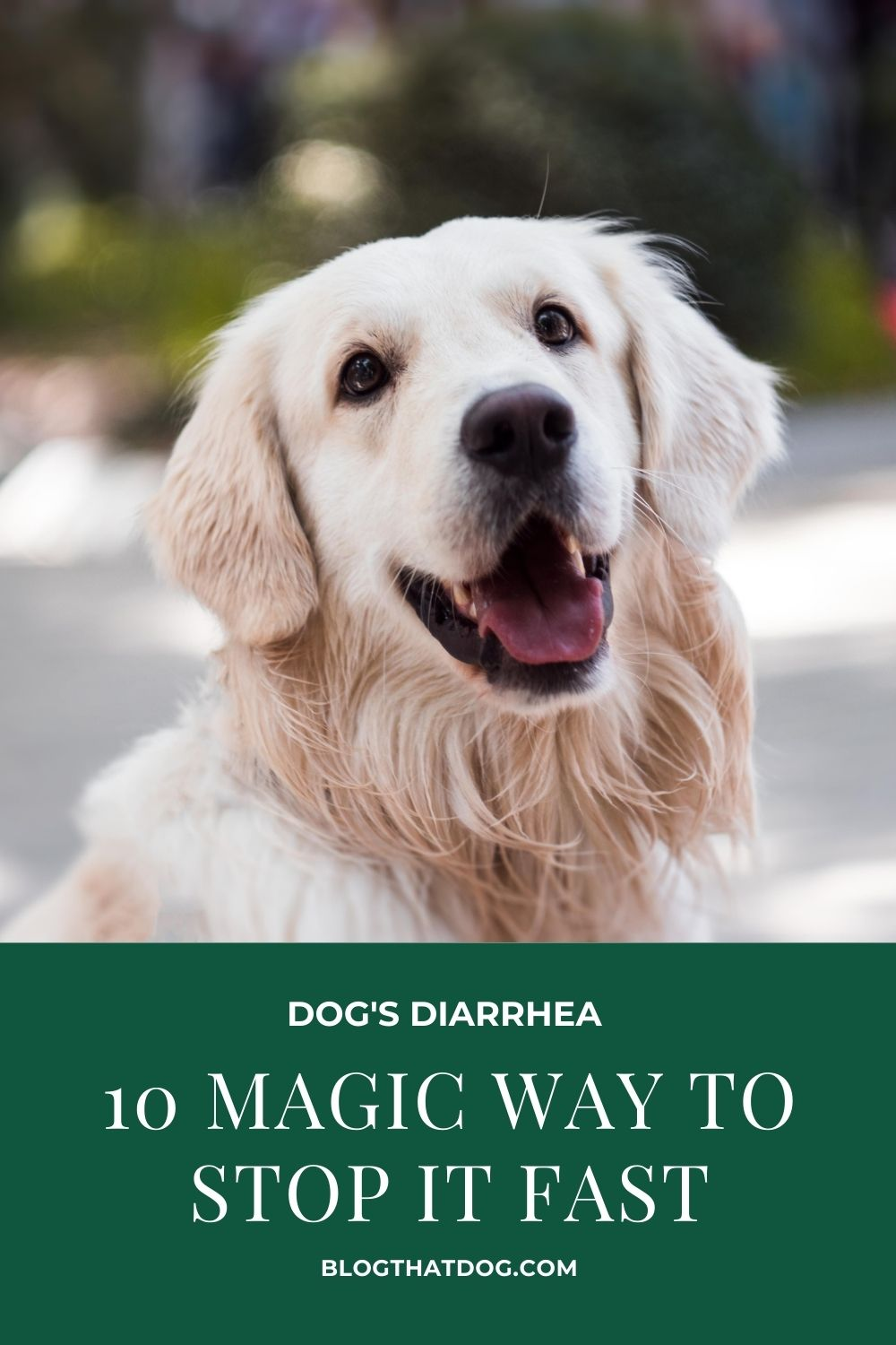 How to stop diarrhea for dog fast