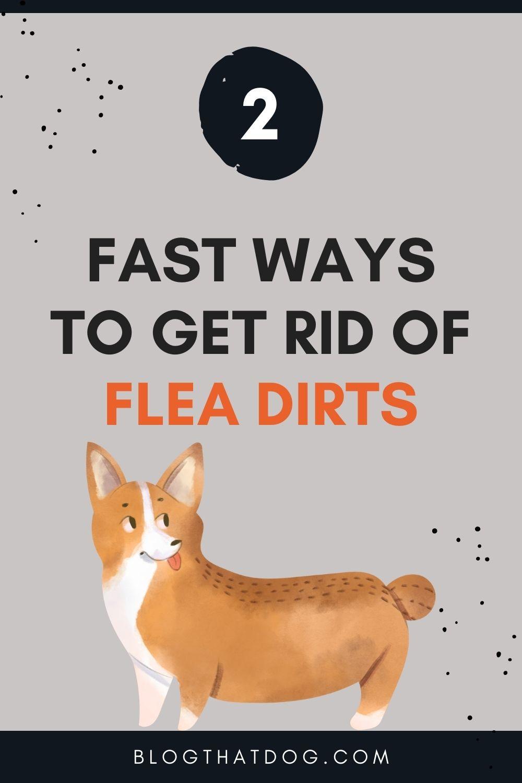 2 fast ways to get rid of flea dirt
