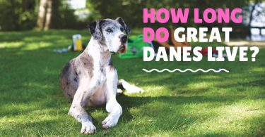 how long do great dane live