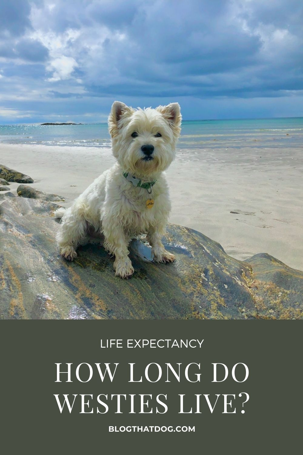 How long do westies live for?