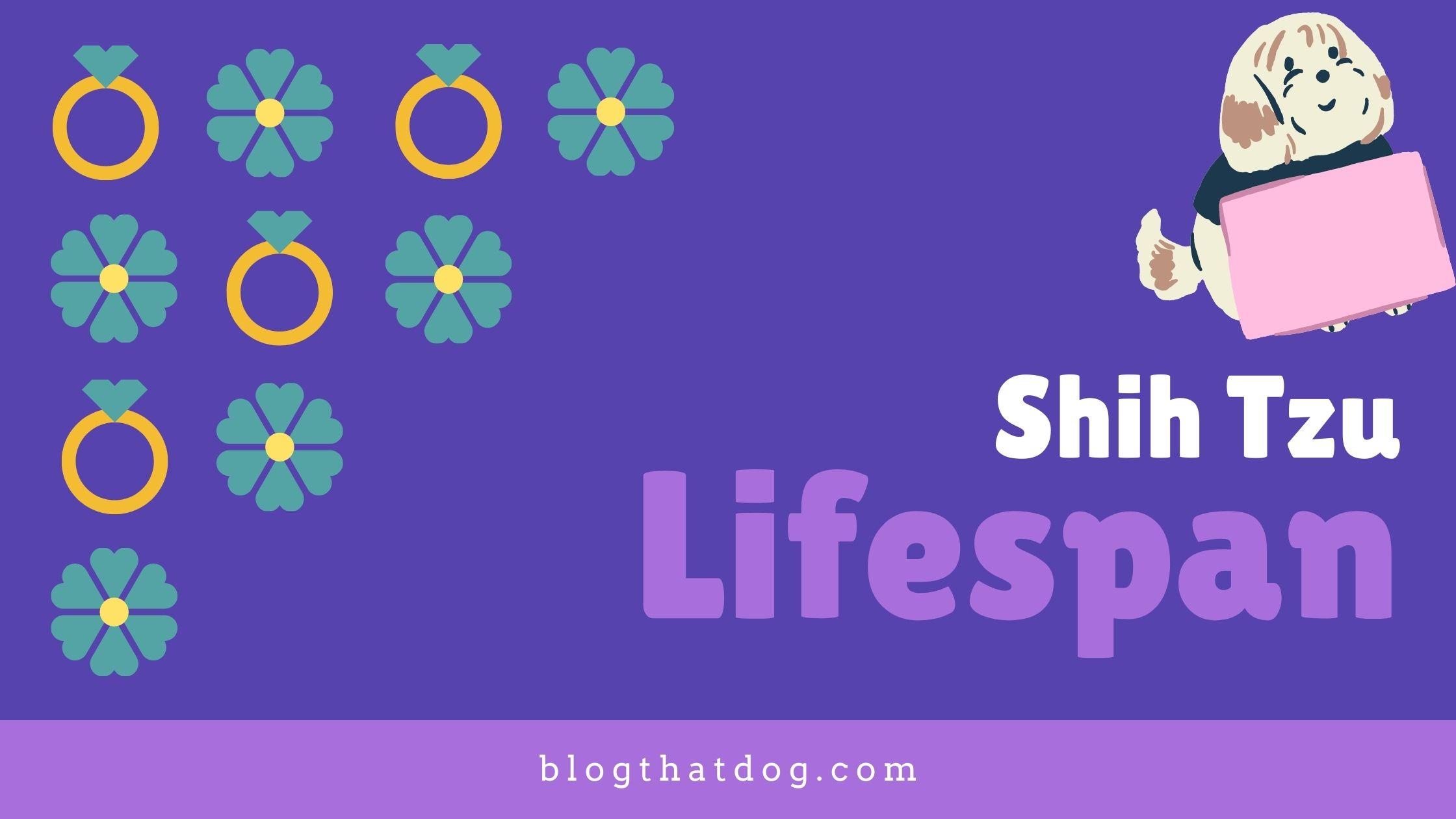 shish tzu lifespan