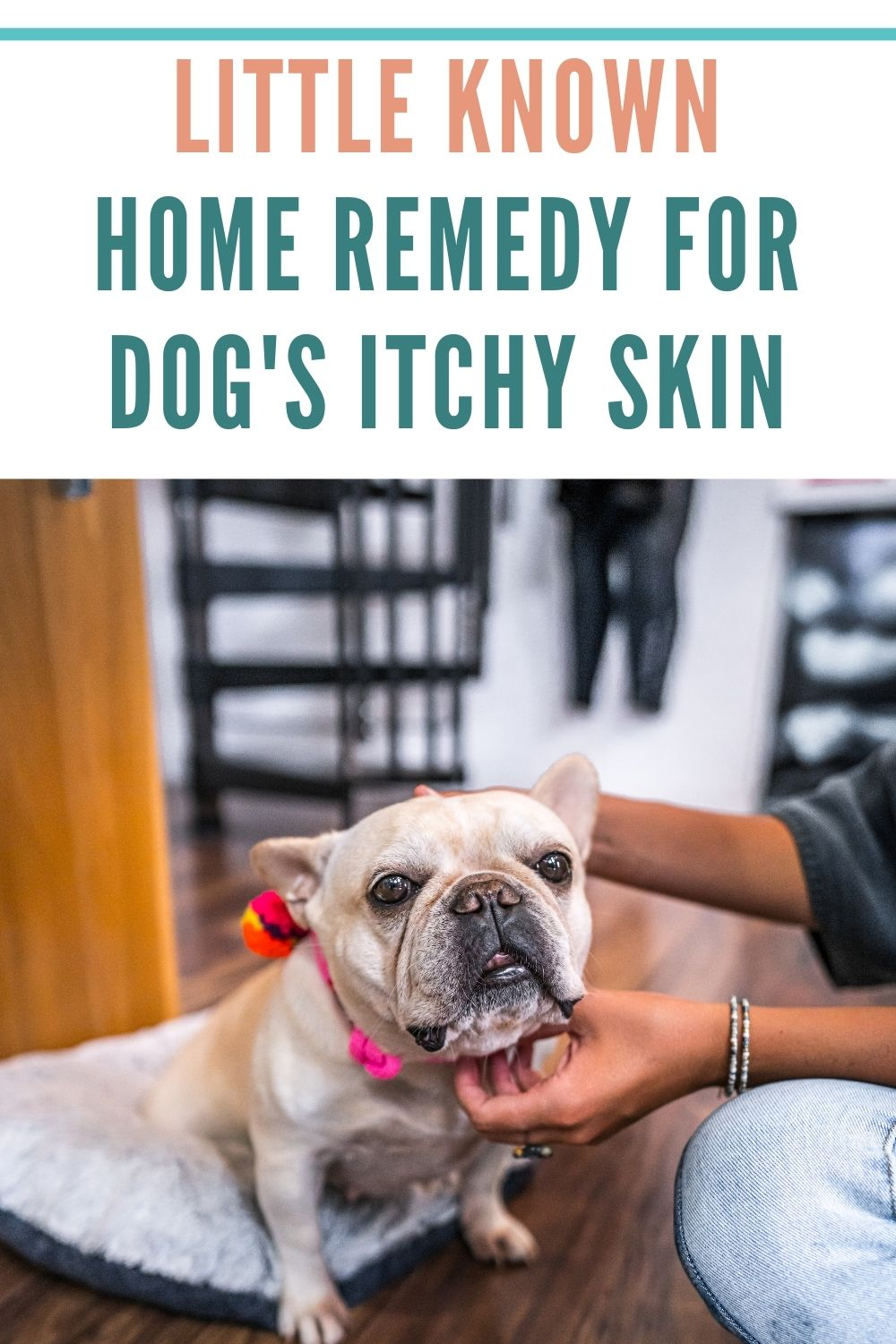 easy home remedy for relieve dog skin allergies itches