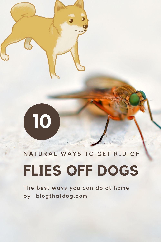 flies off dogs