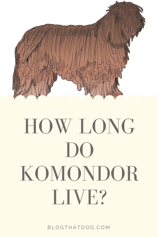 how long do komondor live