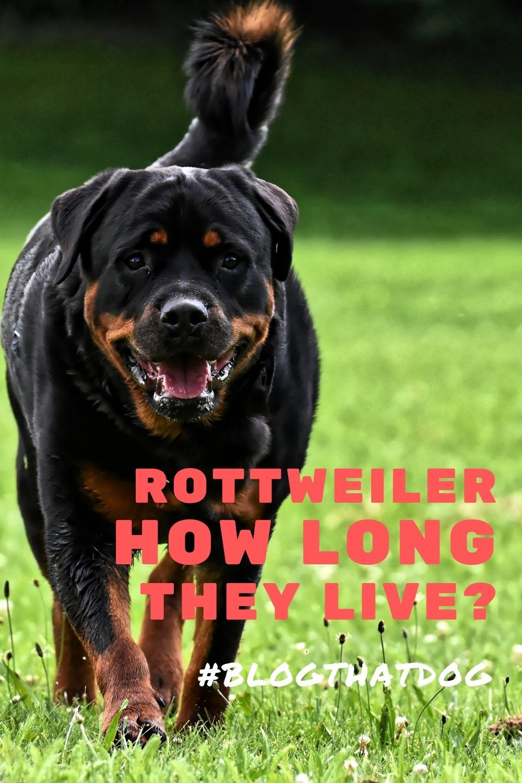 how long do rottweiler live